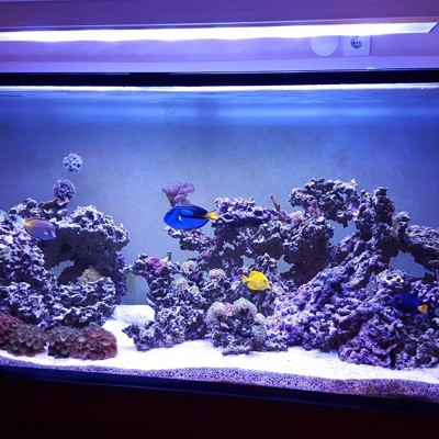 Reef Aquarium 1100 Liters